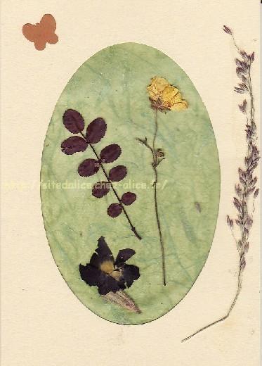 http://paysalice.free.fr//Albums/brico/Cartes/fleurssechees1.jpg